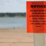 Branstad's toxic blue-green algae problem